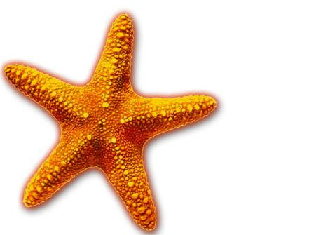 Orange starfish
